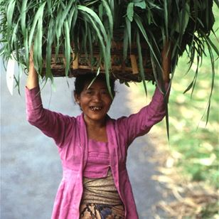 Woman bringing crops to a Plant Clinic