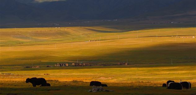 Restoring grasslands of the Qinghai-Tibet Plateau