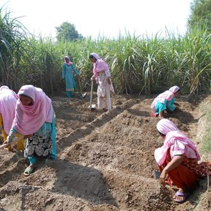 Working paper: Revealing the hidden face, enhancing the role of women farmers