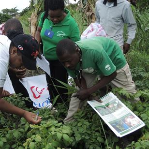 Plantwise team collaborating with partners in Mozambique