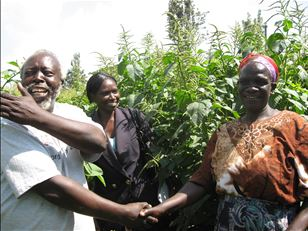 African seed health: case study