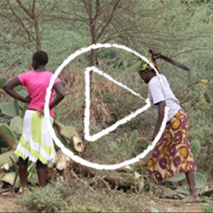 Video - Invasive species and livelihoods vision