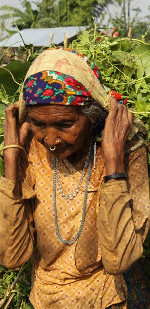 Nepali women carrying invasive species