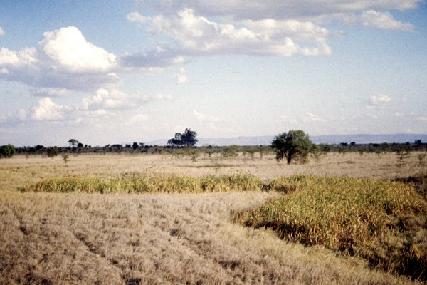 Dambo situated in highland bushed grasslands during the dry season. breeding site for flood water breeding Aedes spp. transmitting RVF transvarially. Sub-Saharan Africa.