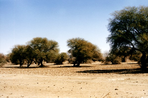 Seasonal flood area in Senegal (Walo), the source of floodwater breeding Aedes spp.