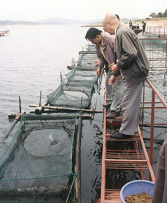 Small in-lake net cages used for weaning Chinese perch (Siniperca chuatsi) onto artificial diets. China.|Weaning Chinese perch Siniperca chuatsi onto artificial diets in small net-cages.