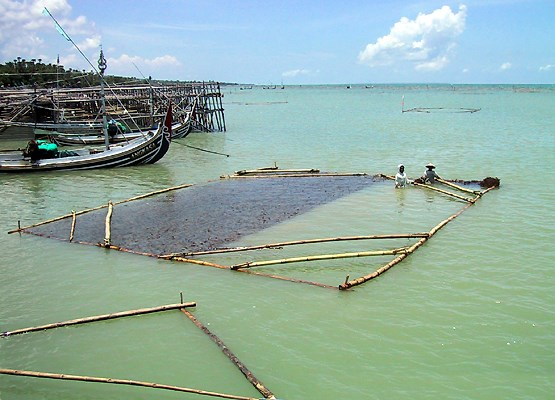 Raft farming of Kappaphycus in Madura, Indonesia.