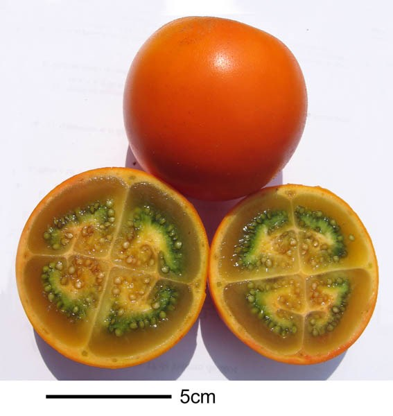Solanum quitoense (Narangillo); ripe fruits, whole and sectioned. Note scale.