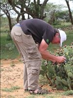 Arne Witt with Opuntia stricta in Laikipia