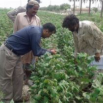 Training cotton farmers in the field