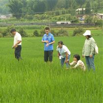 Project staff inspecting rice fields in Yunnan Province, China