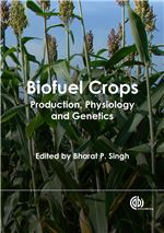 Book cover for Biofuel crops: production, physiology and genetics.