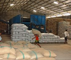 Delivery of cocoa to a trader's warehouse