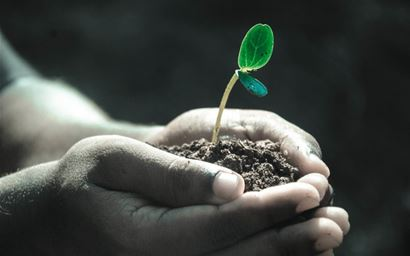 Seedling and soil in hands
