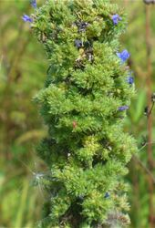 Biocontrol News and Information