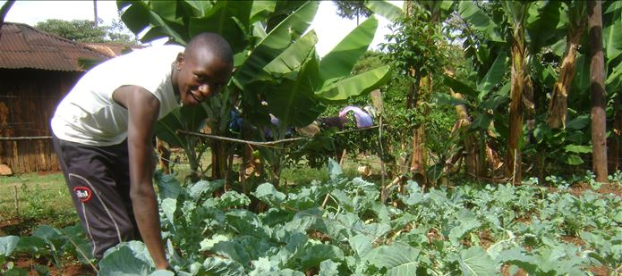 New soil health website supports African farmers on World Food Day