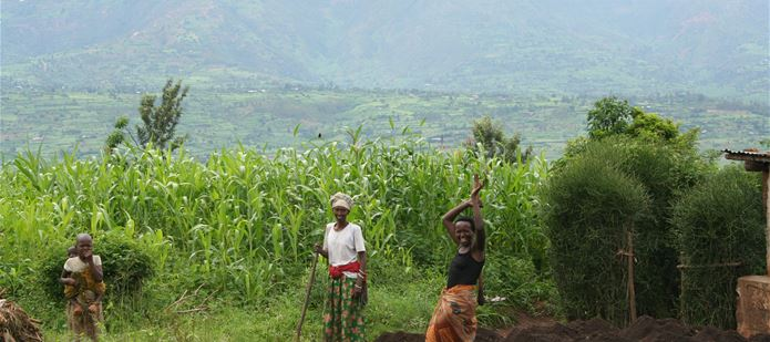 Sustainable solutions to soil pest problems in Rwanda