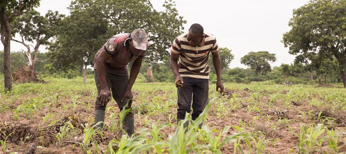 New $400,000 Fall Armyworm Tech Prize launches