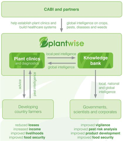 How Plantwise works. CABI and our Plantwise partners help to establish plant clinics and build healthcare systems and provides gobal intelligence on crops, pests, diseases and weeds.