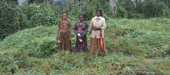CABI receives JRS grant to publish dataset on invasive alien plants in Sub-Saharan Africa