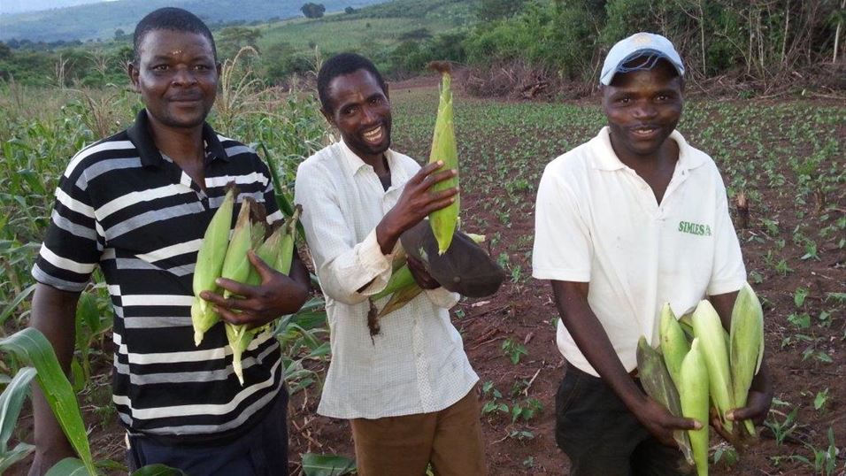 Farmers with good crop of maize