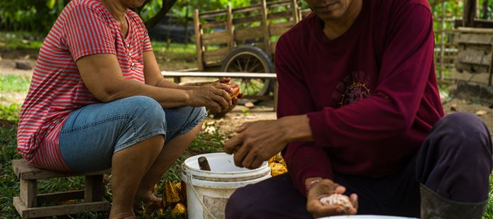 CocoaSafe project helps smallholder farmers access cocoa markets