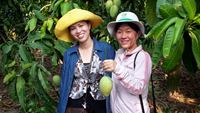 Producing fruit crops through innovative and market-orientated IPM in Vietnam