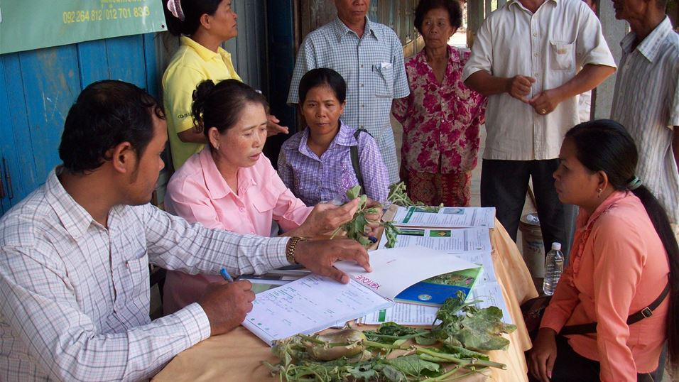 Strengthening agro-ecosystem health and building resilience in Climate Smart Villages