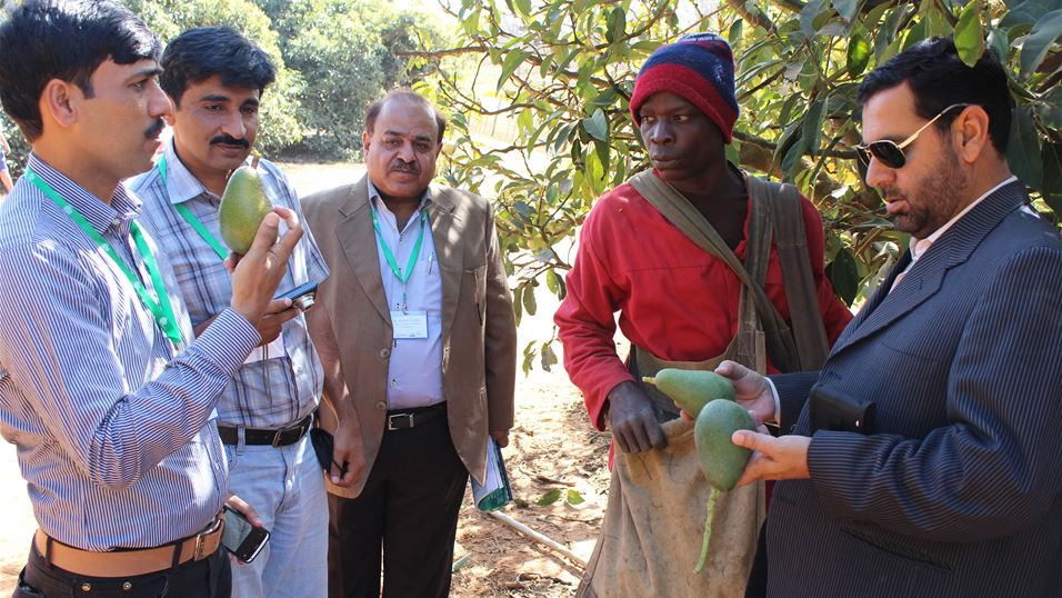 Delegates of South Africa Walk the Chain activity visiting an avocado orchard in Nelspruit, South Africa
