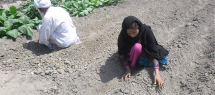 Agricultural training for Pakistan