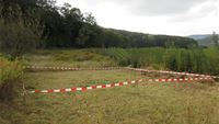Open field test with Ceutorhynchus rusticus in southern Germany