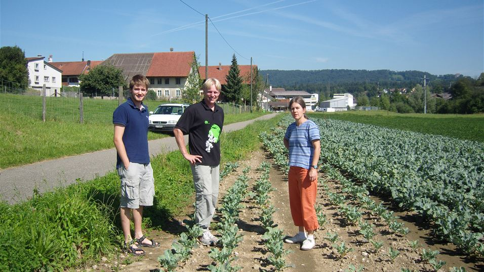 Inspecting cabbage fields for swede midge damage.