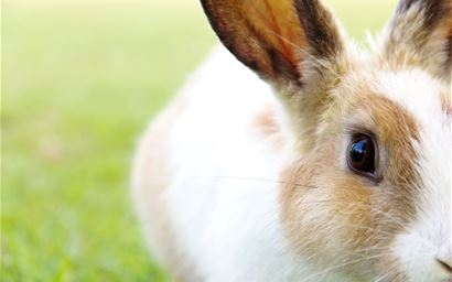 close-up of cute bunny rabbit on the grass
