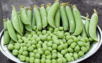 pea pods and seeds on a plate