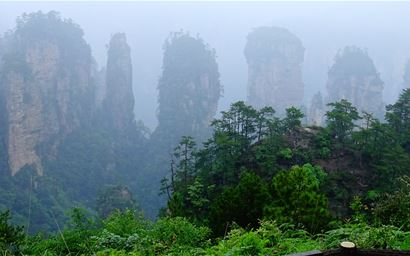Chinese subtropical forest landscape with misty rock formations in background
