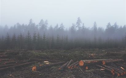 Cut down trees in a forest depicting deforestation
