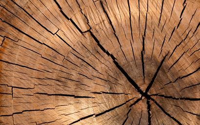 Close up of a tree trunk cross section with visible tree rings and cracks