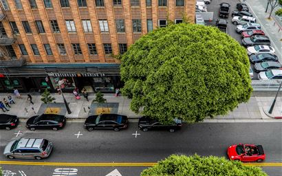 Aerial shot of a tree in the middle of a busy city street