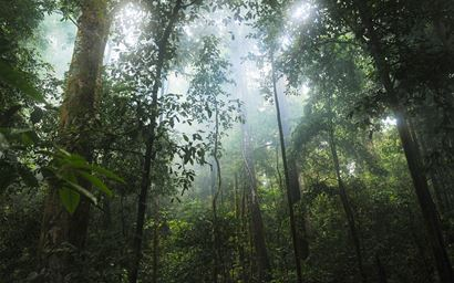 Picture of humid tropical forest with mist in canopy from forest floor