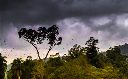 Dark clouds above tropical forest