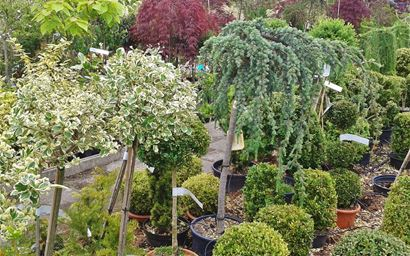 trees and shrubs of different ages and species at a plant center or nursery