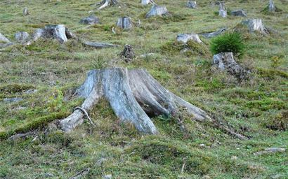 Grassy slope dotted with tree stumps
