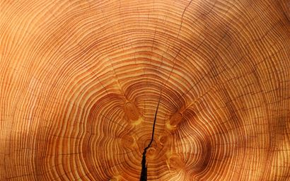 End view of a tree trunk cross-section with a crack running through it