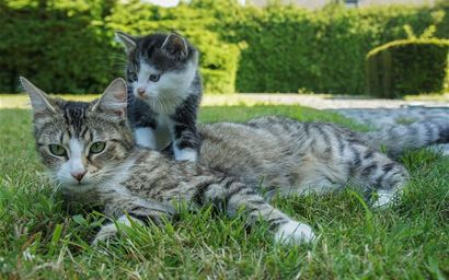 Kitten with mother