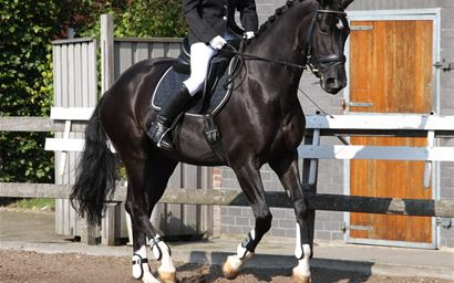 Horse in a dressage competition