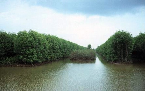 The integrated shrimp-mangrove farming system. Mekong Delta, Vietnam.