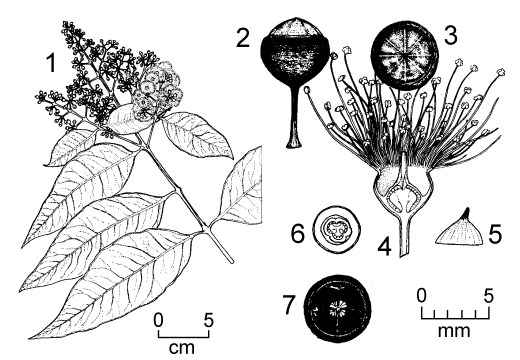 Provenances from the north-eastern tip of mainland Papua New Guinea.  
