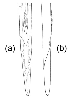 Aculeus tip, ventral (a) and lateral (b) views.