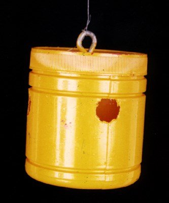 B. correcta: modified attractant trap used for monitoring guava fruit fly.