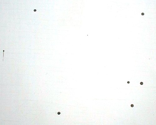 'Kick-out' holes excavated through a painted wood surface for pellet ejection by C. brevis.